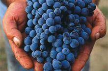 给我5分钟!让你变成葡萄酒专家!