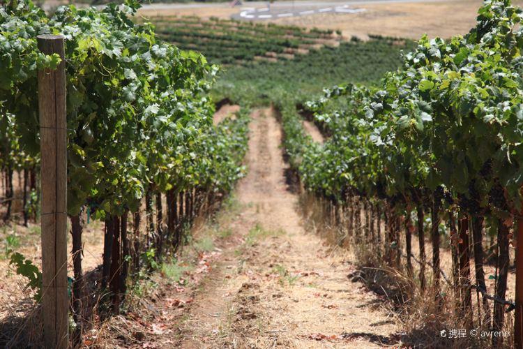Mazzocco Winery1