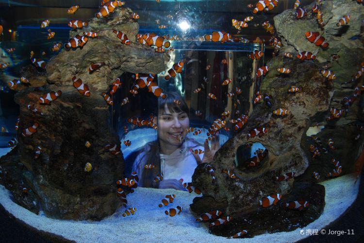 兩大洋水族館1