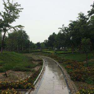 东营森林乐园旅游景点攻略图