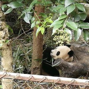 天府熊猫塔旅游景点攻略图