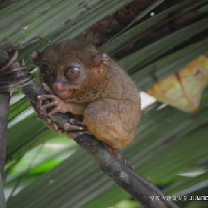 菲律宾游记图文-第780回:塔比兰拉城洛博克,保和眼镜猴保护区