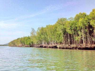 Mangrove Ecological Reserve