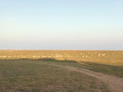 溫根塔拉草原旅遊區