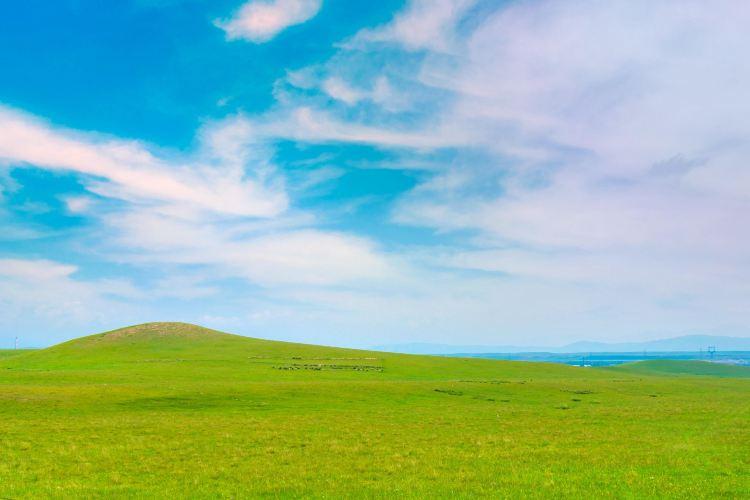 Jinyintan Grasslands