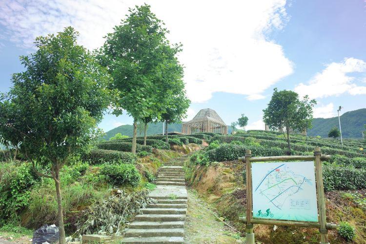 大木山茶園景區