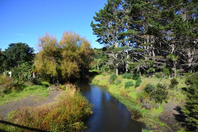 秋天的步道——奥克兰周边Te Henga Walkway – 新西兰游记攻略插图8