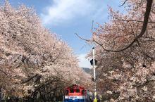 鎮海慶和火車站櫻花篇