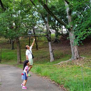 城彩苑 樱之小路旅游景点攻略图