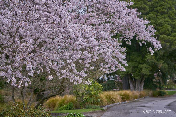 Christchurch Botanic Gardens4