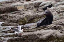 15天纽西兰南北岛游 之凯库拉观鲸