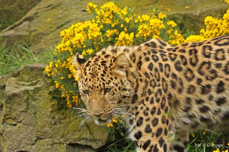 RZSS 에든버러 동물원1
