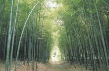 翠绿竹林,自然呼吸——潭阳 绿竹节