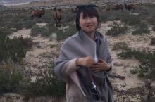 拉萨的路上路过青海湖骑马、柴达木盆地的野骆驼、