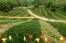 五月的宜宾南溪休闲谷既花卉园