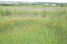 达里诺尔湖·内蒙 湖边草原 沙画 辽阔的湖面