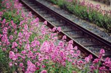 在那鲜花盛开的地方