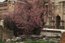 意大利 古罗马遗址的艳粉花朵