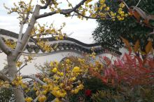上海外冈蜡梅园