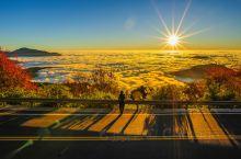 秋天的阿里山,赏云海看红叶醉晚霞,你想要的美景这里都有!
