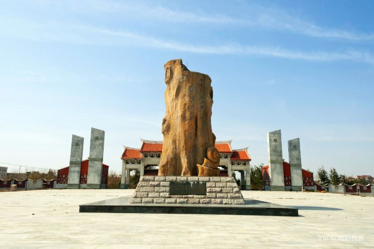 Shenhuwan Submarine Ancient Forest Relics Nature Reserve2