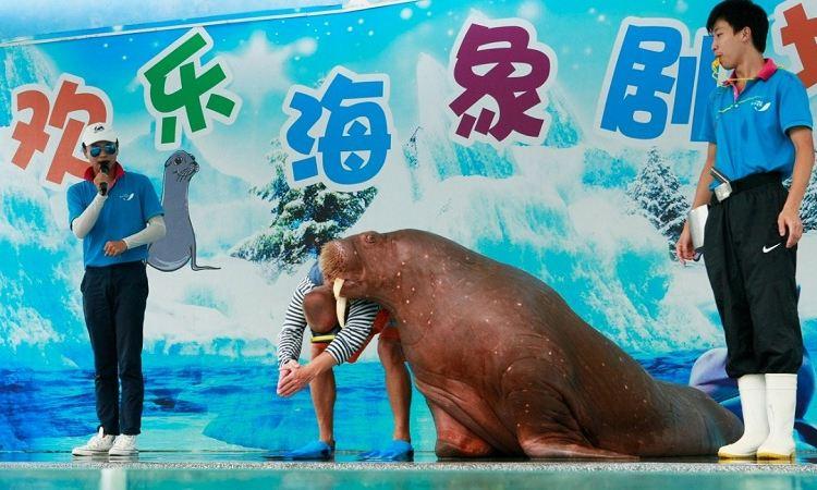 Xiaomeisha Sea World2