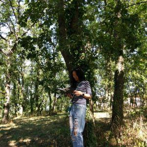 Forêt De Bouconne旅游景点攻略图