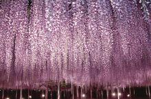 紫色控看过来,这次来点不一样的紫色,满足你所有的紫色畅想