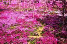 英哥石植物园