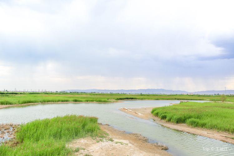 張掖國家濕地公園3