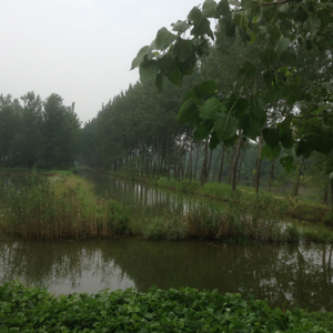 洪泽区游记图文-蒋坝,千年古堰第一镇——洪泽、扬州7日游第4天