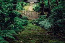 镰仓有个妙法寺,苔藓步道一年只开放三个月