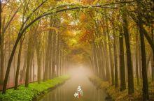泰州这个小城,竟然藏有十万株水杉,秋色迷人