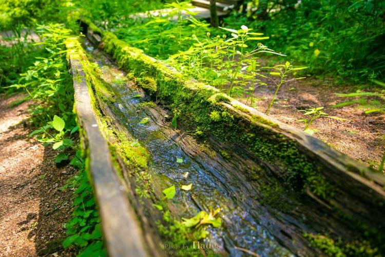 五營國家森林公園2