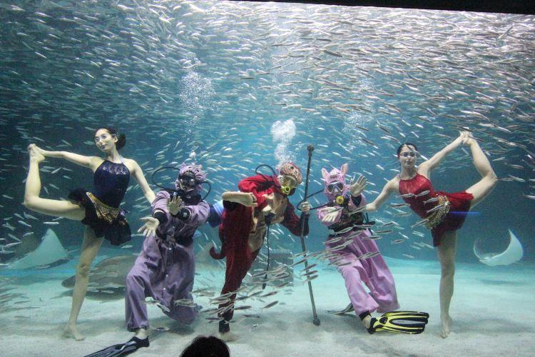 COEX Aquarium2