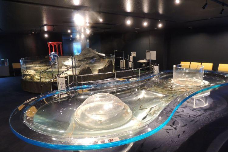 Chitose Salmon Aquarium1