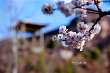人面桃花相映红--解锁石屋民宿,邂逅坡峰春色