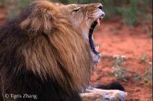 走!去肯尼亚直击野生动物大迁徙!