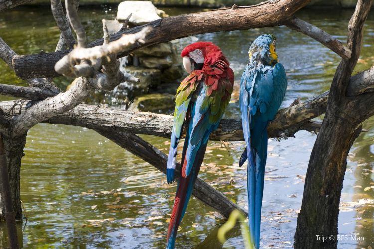 San Antonio Zoo2