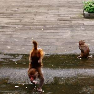桂花岛(猴岛)旅游景点攻略图