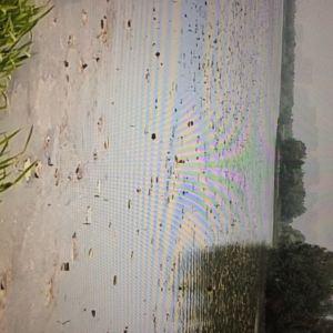 洋湖湿地公园旅游景点攻略图