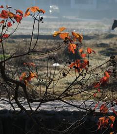 [黄山游记图片] 皖南川藏线,宏村,塔川自驾3日绝美秋色摄影游