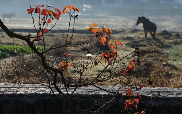 皖南川藏线,宏村,塔川自驾3日绝美秋色摄影游