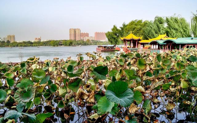 秋游济南大明湖