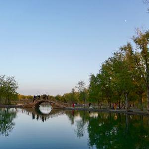 金塔胡杨林旅游景点攻略图