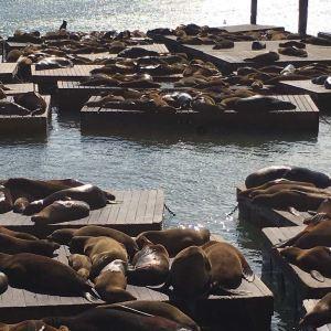 海湾水族馆旅游景点攻略图