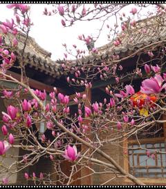 [林州游记图片] 向春天出发——2019,3,自驾、踏春。(一)安阳、红旗渠。