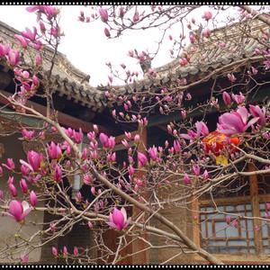 林州游记图文-向春天出发——2019,3,自驾、踏春。(一)安阳、红旗渠。