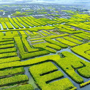 泰州游记图文-让兴化的春天唤醒你的相机!自带滤镜的随手拍,轻松惊艳朋友圈