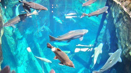 湖區水族館